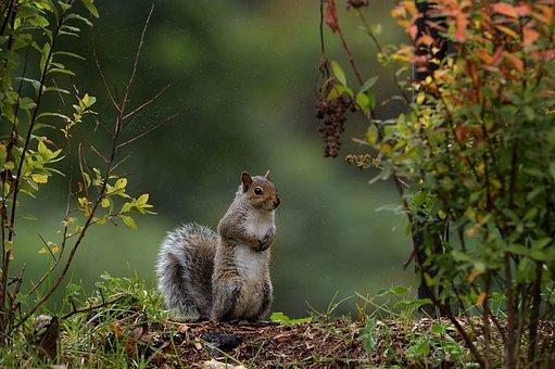 Rainning, Squirl, Nature, Wild, Predator, Wildlife