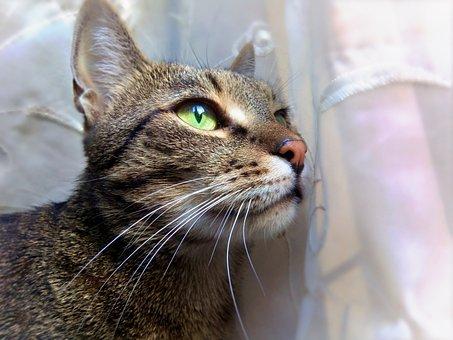 Cat, Kitten, Room, Watch, Animal, Feline, Cute, Eye