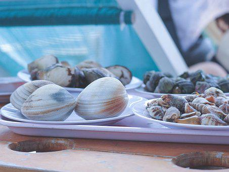 Snail, Discus Snail, Feed, Shell, Clam, Seafood