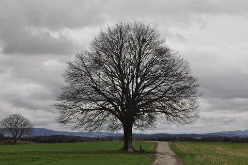 Bare Tree, Lone Bank, Spring, Hödingen