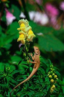 Flower, Chameleon, Nature, Animal, Summer, Reptile