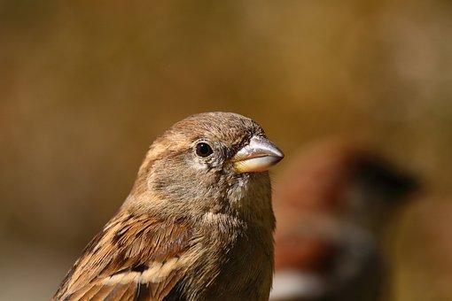 Sparrow, Park, Sun