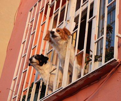 Window, Dog, Dogs, Glass, Animal, Animals, Pets
