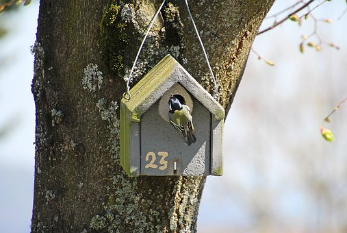 Tit, Bird, Aviary, Songbird, Small Bird, Cute, Wing