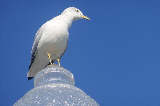 Blue Sky, Seagull At The Port Of Montreal