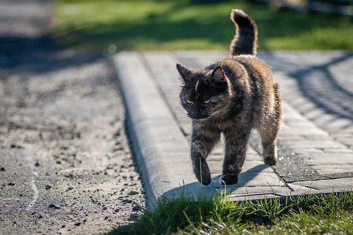 Brown Cat, A Bored Cat, Goes, Domestic Cat
