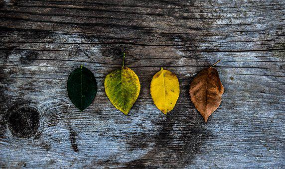 Leaves, Art, Colors, Green, Yellow, Brown, Black, Grey