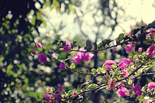 Flower, Nature, Summer, Spring, Landscape, Relax