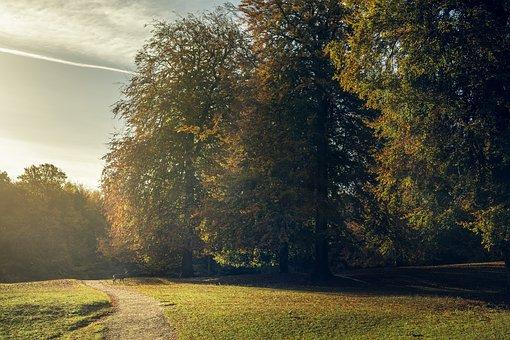 Hjort, Deer, Forest, Autumn, Golden Leaves, Leaves