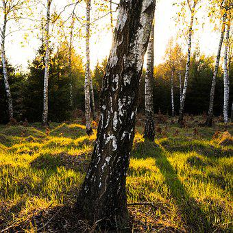 Spring, Sun, Forest, Landscape, Nature, Easter, Light