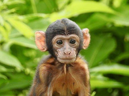 Monkey, Baby, Animal, Nature, Animal World, Mammal