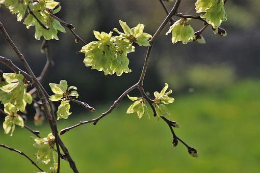 Garden, Sprig, Park, Morning, Plant, Closeup, Flower