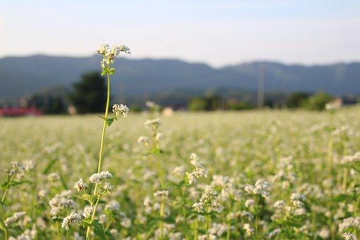 Flowers, Memilkkot, Spring Flowers, Nature, Sky