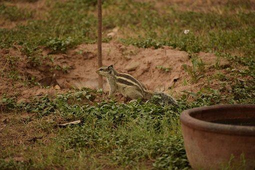 Green, Squirrel, Sand, Nature, Cute, Animal, Ground