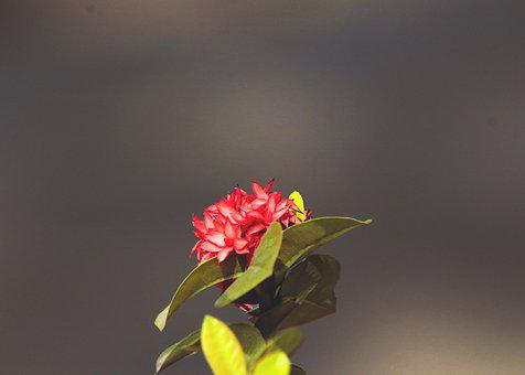 Small Flower, Red Flower, Resistance, Colorful, Nature