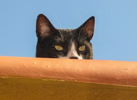 Cat, Animal, Nature, Roof, Kitten, Portrait, Feline