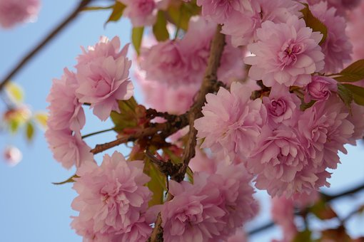Tree, Trees, Flowers, Pink, Spring, Season