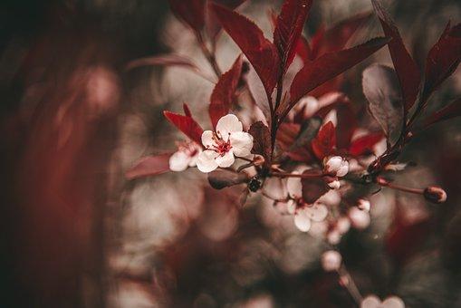 Flower, Flora, Nature, Bloom, Summer, Spring, Plant