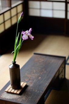 Japan, Iris, Purple, Vase, Traditional, Tatami