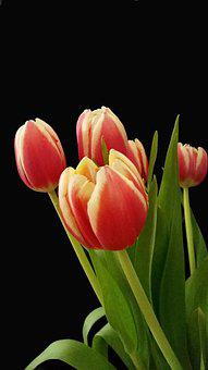 Tulips, Easter, Spring, Flowers, Nature