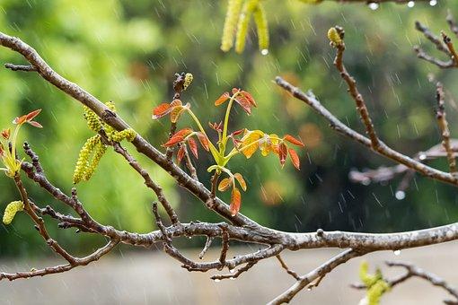 Rain, Orange, Drip, Wet, Nature, Color, Drops, Flower