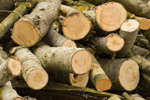 Wood, Trunk, Bark, Tree, Nature, Forest, Log, Cup