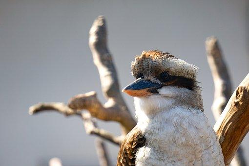 Bird, Kingfisher, Nature, Animal, Bill, Animal World