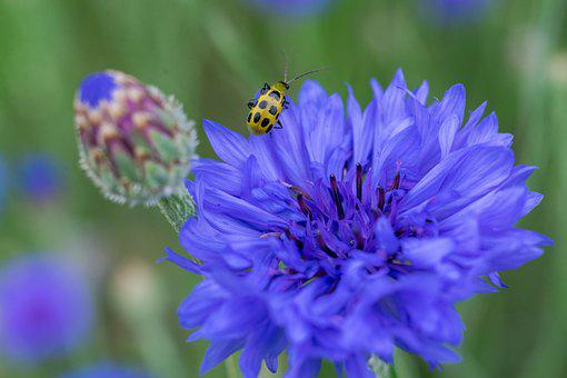 Bug, Bud, Blue, Cute, Nature, Flores, Flowers, Spring