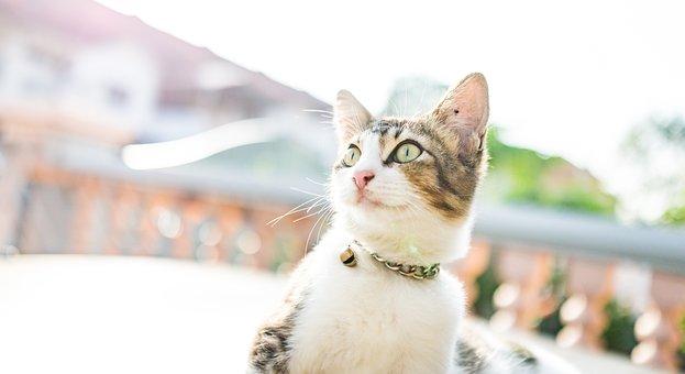 Cat, Meow, Kitten, Cute, Pet, Feline, Animal, Kitty