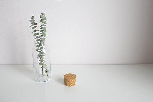 Eucalyptus, Leaves, Vase, Decoration, Glass, Leaf