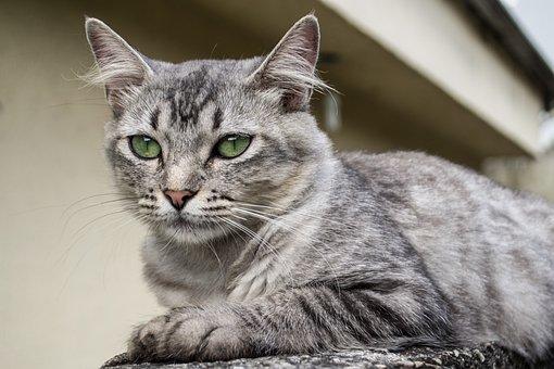 Cat, Kitty, Feline, Animal, Adorable, Cute, Domestic