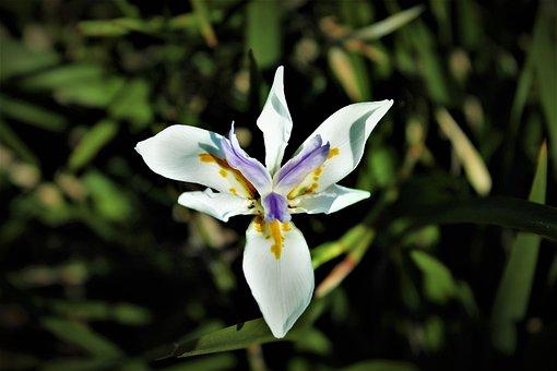 Flower, White Flower, Vegetation, Parma, Violet, Yellow