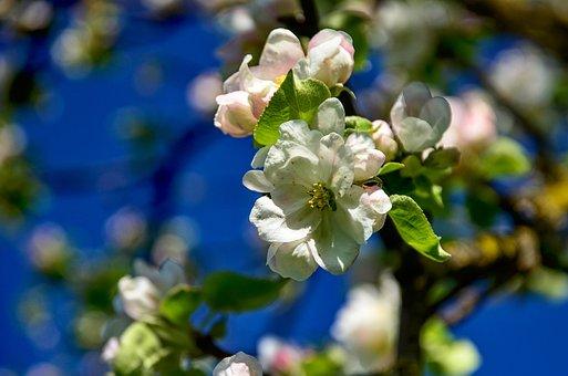 Flowers, Branch, Spring, Nature, Flowering Twig