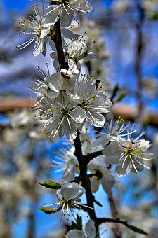 Flowers, Spring, Branch, Flowering Twig, Color