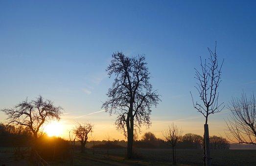 Pear, Fruit Tree, Flowers, Blossom, Sunrise