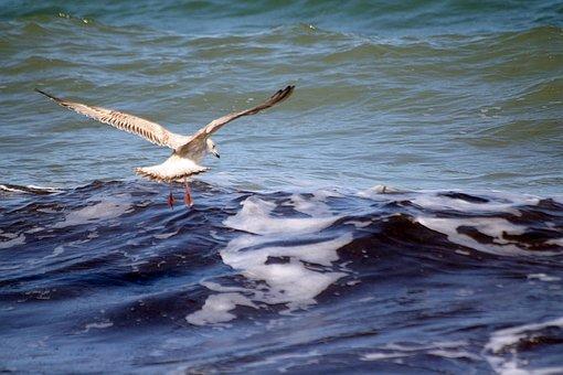 Gull, Descent, Catch, Baltic Sea, Travemünde