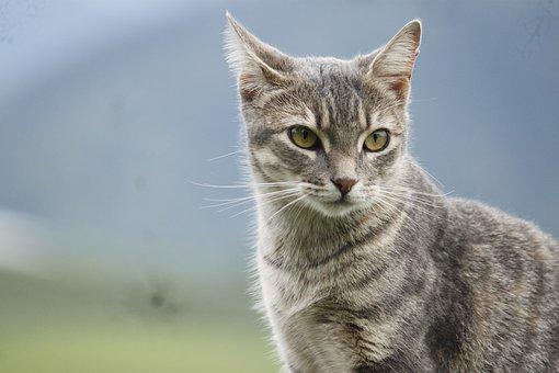 Cat, Blur, Animals, Pet, Kitten, Skin, Mammals, Feline