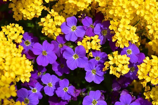 Flowers, Mats Flower Purple And Yellow