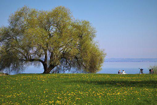 Landscape, Meadows, Picnic, Green, Relaxation