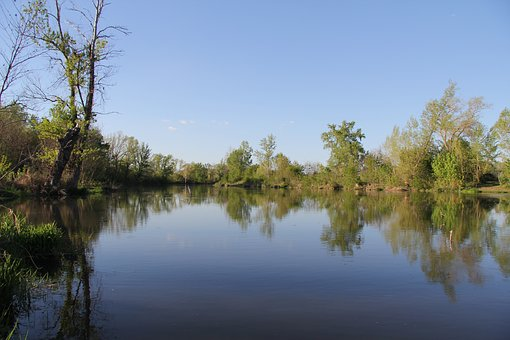 River, Water, Nature, Trees, Summer, Mirroring