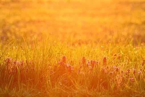Dew, In The Morning, Nature, Morning, Grass, Light