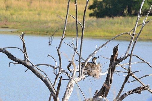 Bird, Nest, Tree, Water, Nature
