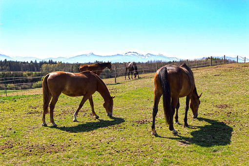 Horse, Brown, Fuchs, Pasture, Grass, Forest, Meadow