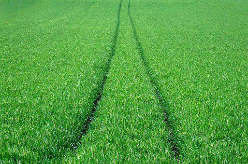 Field, Wheat, Green, Agriculture, Cereals, Power