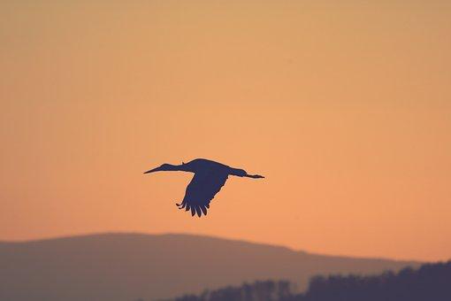 Silhouette, Bird, Stork, Flying, Twilight, Sky