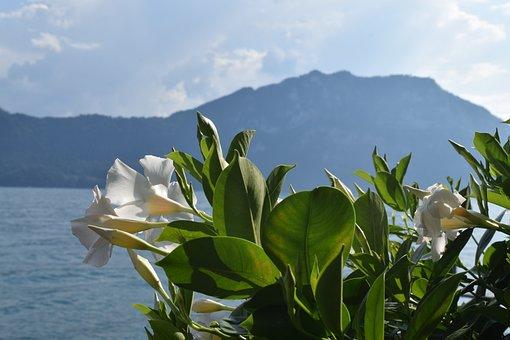 Europe, Switzerland, Landscape, Swiss, Alps, Nature