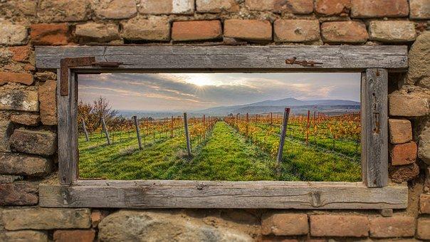 Vineyards, Mood, Vineyard, Nature, Landscape, Autumn