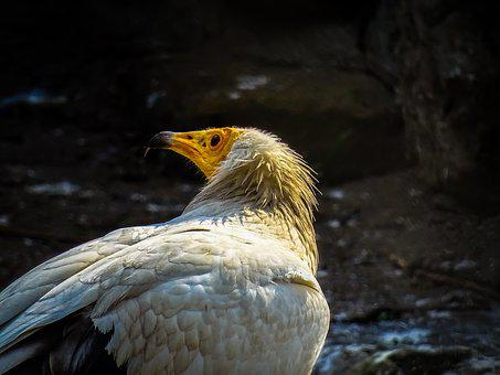 Bird, Adler, Animel, Wildlife, Zoo