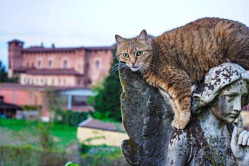 Angel, Cat, Cat European, Agility, Agile, Background