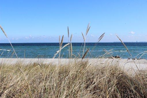 Beach, Grass, Sea, Dunes